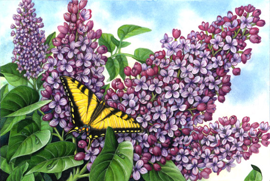 Lilacs and Swallowtail Butterfly