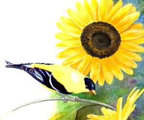 Sunflower with Goldfinch